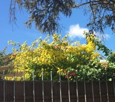 Enredadera verde y amarilla