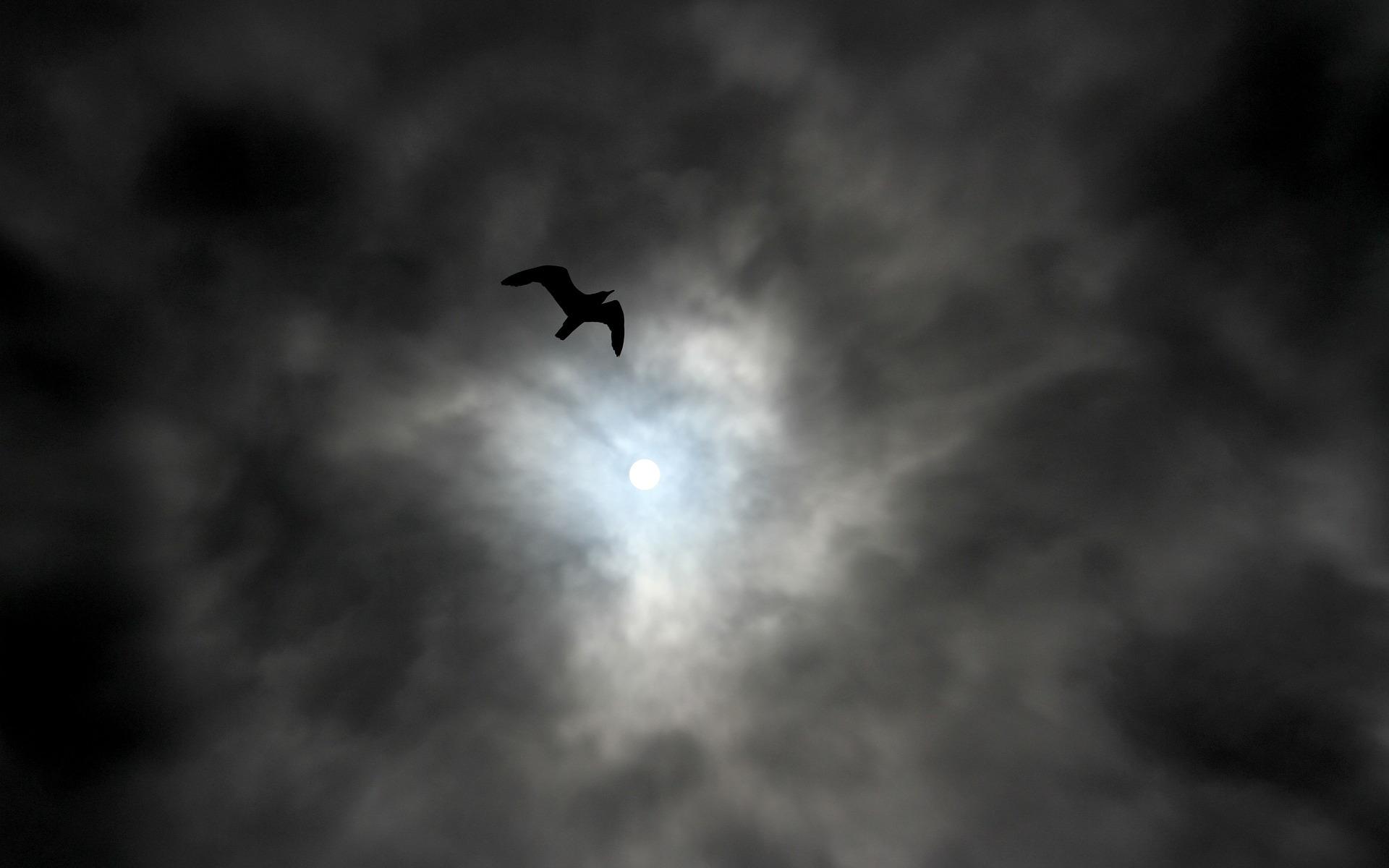 Ominosa ave negra